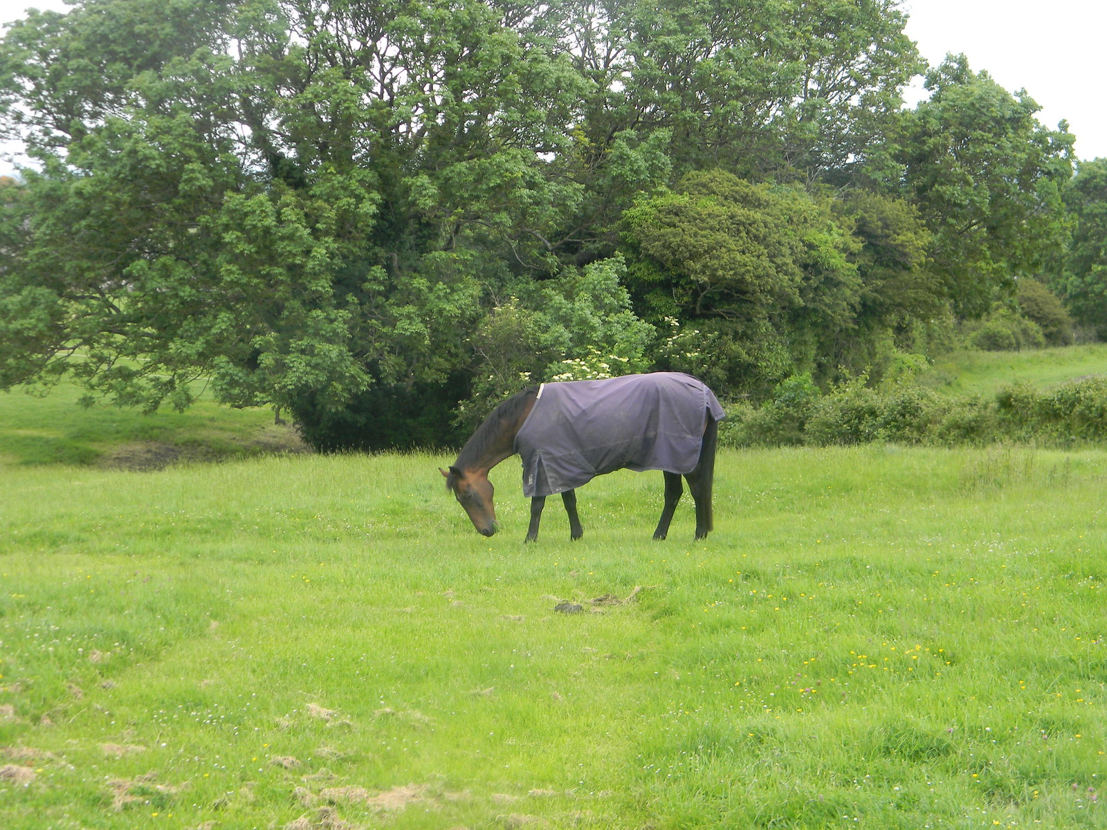 Horse in a field Lewes to Berwick