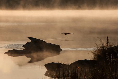 mist lake bird misty pond bravo dam central alexandra nz otago butchers