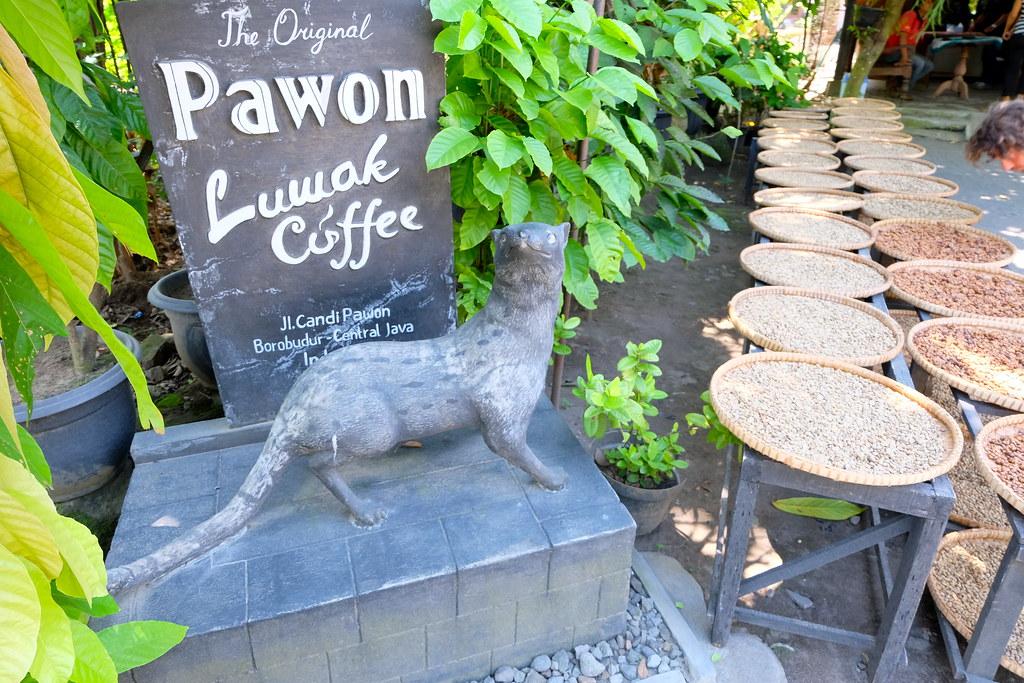 plantacion cafe bali
