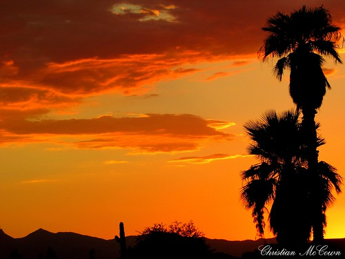 sunset love palmtree sun sunlove country mountains mountain professional greatphotography photography professionalphotography cannonsx400ispowershot pictures art flickr cactus sky outdoor tree plant serene cloud clouds