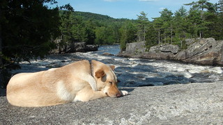 Afternoon nap at the Cribworks | by Maine River Guides