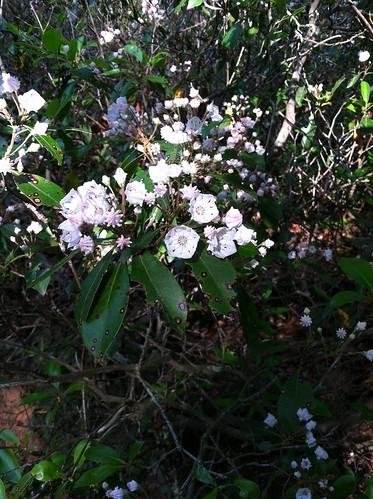 flowers wild plants plant flower bush flora blossom blossoms bloom wildflowers blooms wildflower bushes blooming