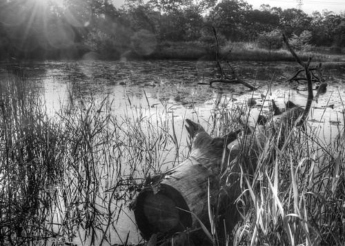 tree water landscape nikon swamp flare d7000