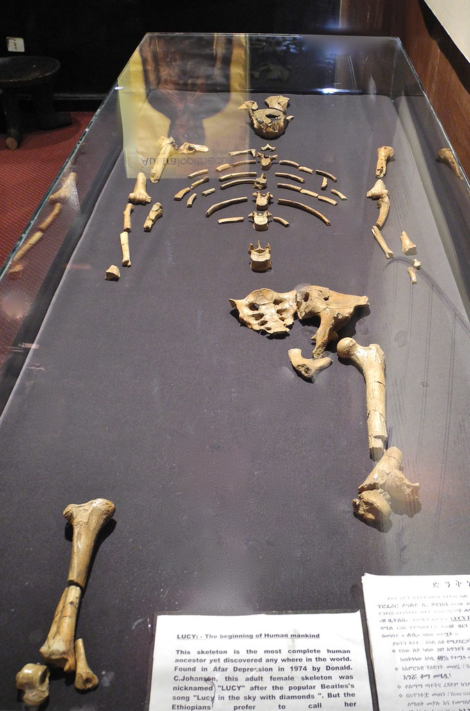Lucy | She goes by many names - Australopithecus afarensis