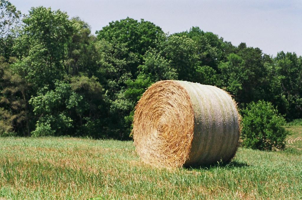 Sycamore Hill Hay