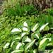 garden_06_29_2012_7b