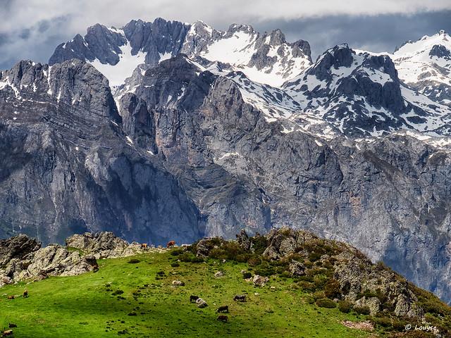 EXPLORE 16 août : Brouter dans les hauteurs /// grazing in the mountains