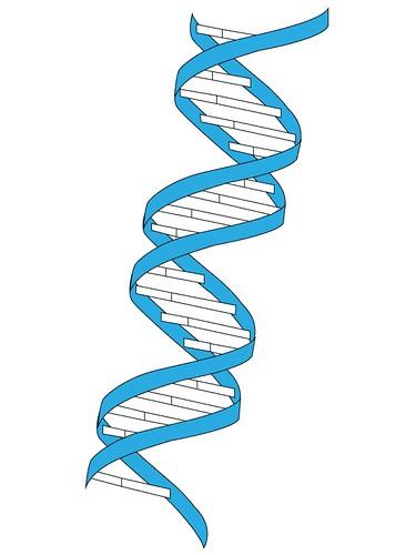 vector DNA | by gemmerich