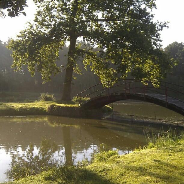 beautiful morning light (2)