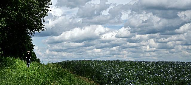 Big Sky, Blue Flax