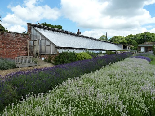 Downderry Lavender Nursery | by Sui Kee Searle