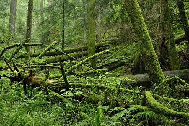Jungle of Rohrach canyon, Vorarlberg