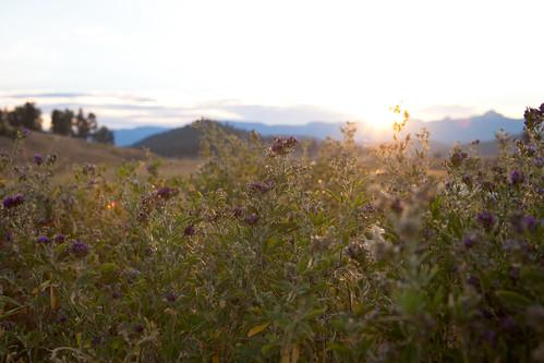 sunset mountains colorado springs co wildflowers pagosasprings pagosa