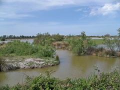 Marais près Vaccarès