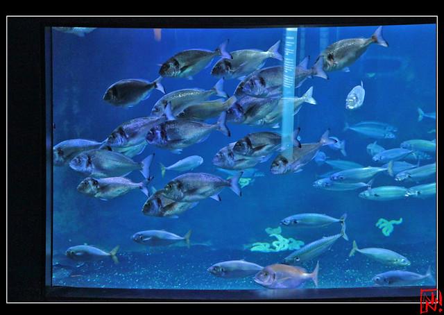 Aquarium de Paris 10/10