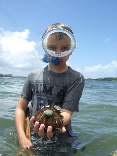 Matthew finds a big sea urchin.
