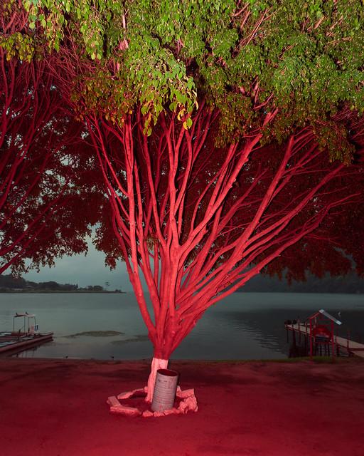 Tree, San Lucas,Lago Atitlan, Guatémala, 2016