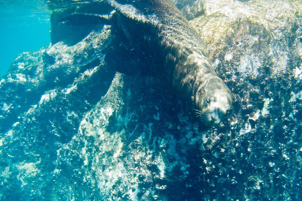 Sea lion-3