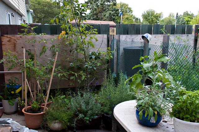 Garden 2012 09