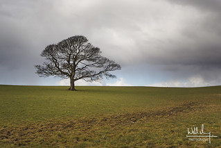 Solitary Tree | by Will M. Photography