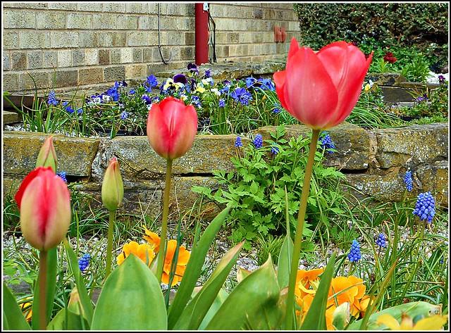 Springtime at Last ...
