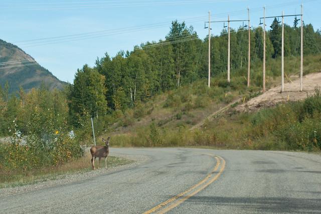 Deer near WAC Bennett Dam