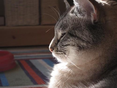 Sunbathing 3