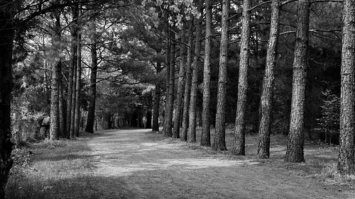 park trees bw forest frankliskepark