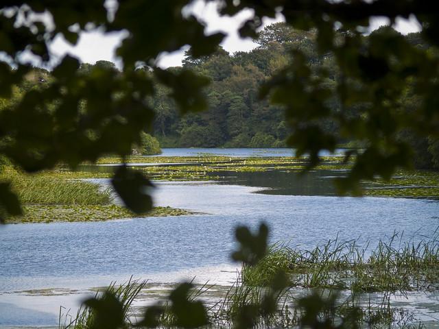 Bosherston Lily Pond
