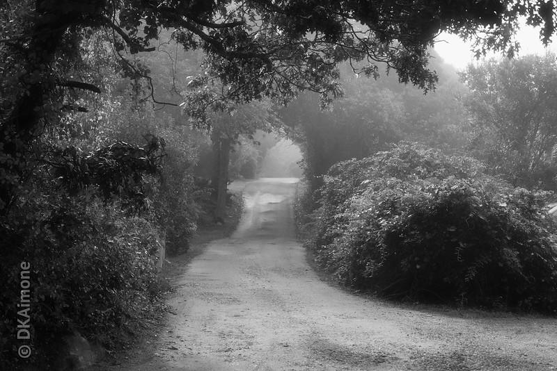 Country Lane, Martha's Vineyard