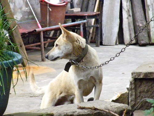 Chained Dog | by barockschloss