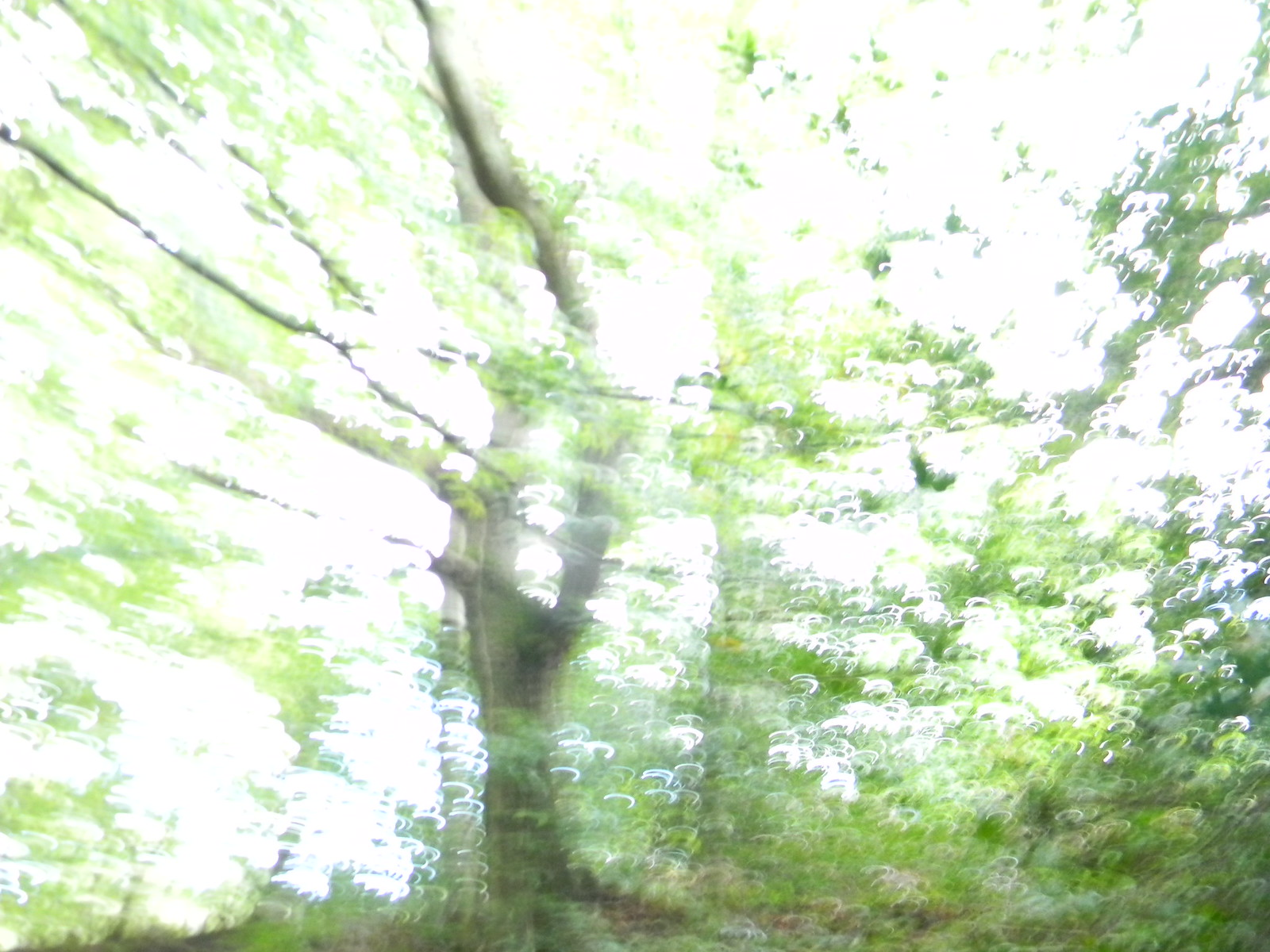 "Trees My camera was having an ""impressionist"" day. Haslemere Circular"