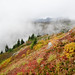 Yellow Aster Butte - Sept 29 2012
