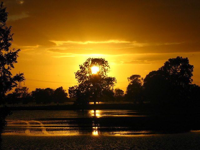 Flood Light (Gold Sunset)