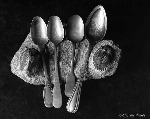 Silver Spoons and Trilobites