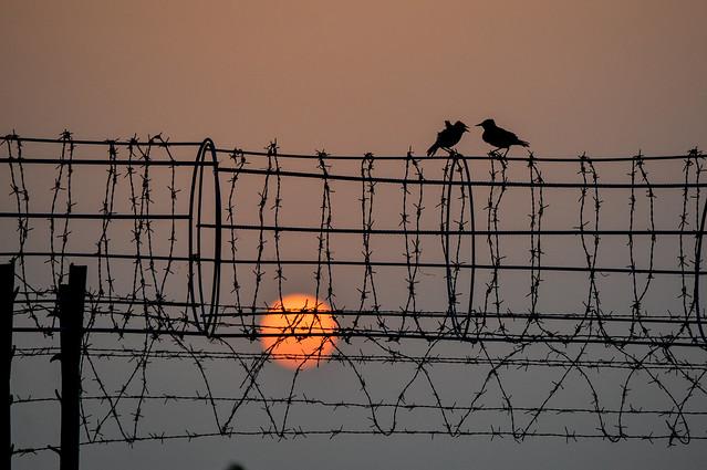 Amazing sunset with birds