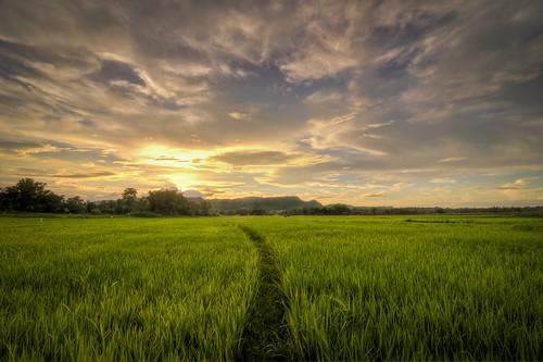 sunset landscape ricefield tarlac bamban tokina1116
