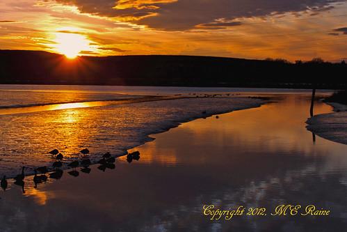 sunset nature wildlife meadowlands wetlands marsh mudflats goldenhour richarddekortepark lyndhurstnj