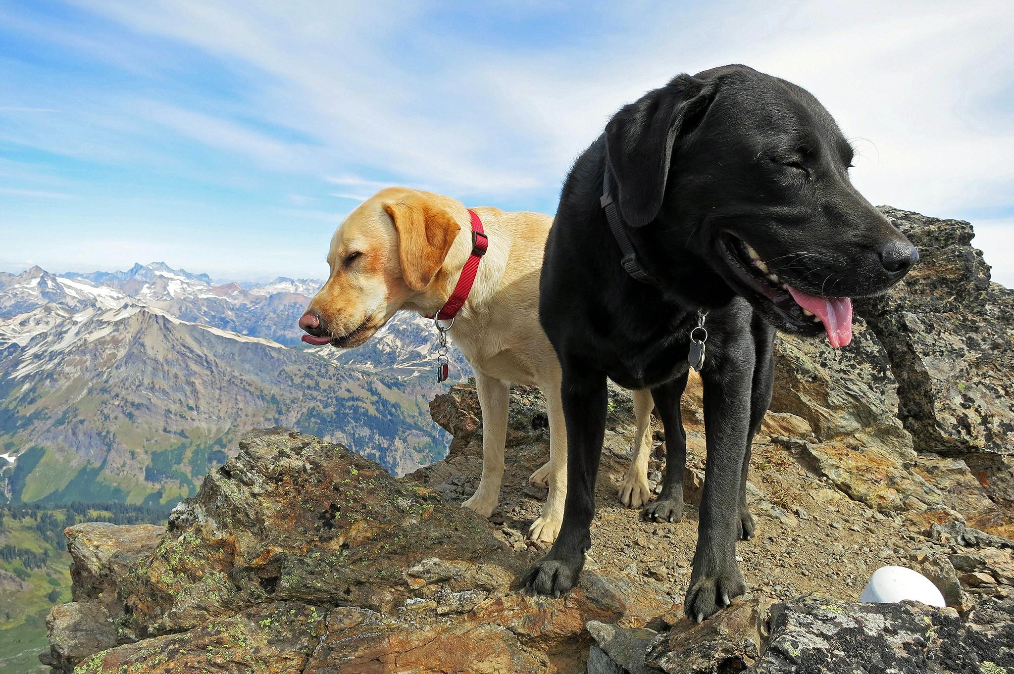 Summit dogs on Clark Mountain