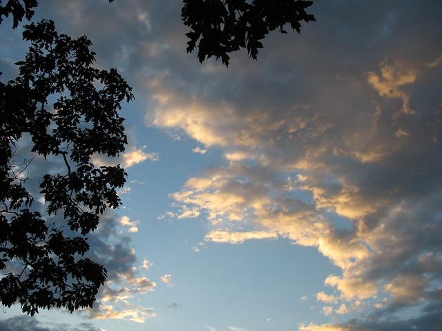 Evening sky, trees
