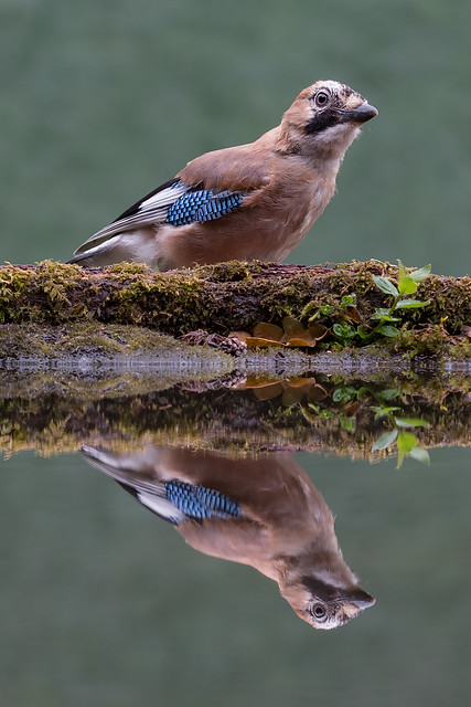On Reflection........It's that Jay again!
