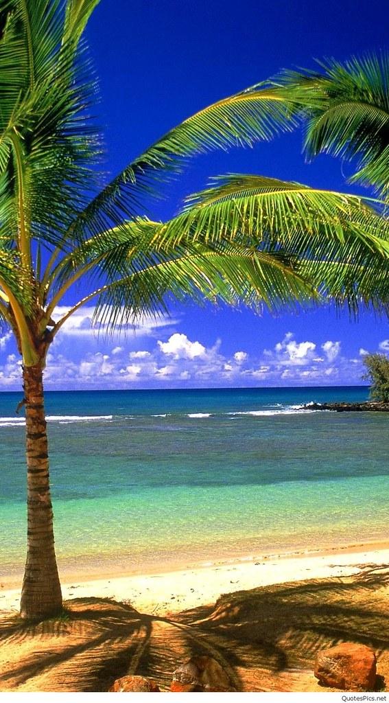 Beach Wallpaper Mobile Nature Beach Iphone 6 Plus 1080x192