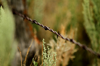 Barbed Wire | by Michael C. Dunning