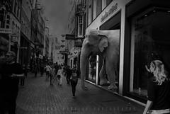 Shopping Like Animals?!