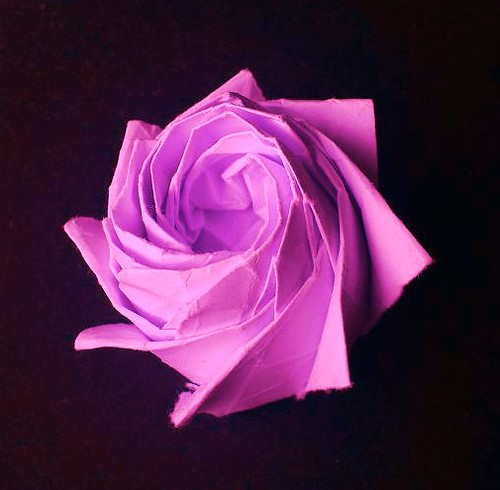 Octagonal rose =)