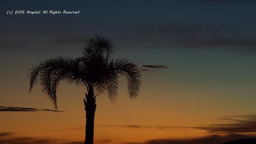 2016 summer july florida ruskin littleharbor sunset palmtree fujifilmfinepixs8200