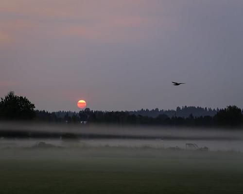 park autumn summer fog sunrise us september wa 2012 marymoor lightroom sammamish topazadjust topazdenoise canoneos5dmarkiii ef100mmf28macrolisusm