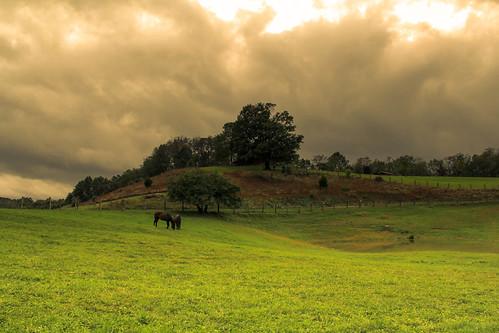 horse clouds twilight dusk grazing