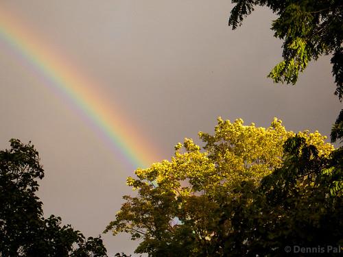 trees rainbow bayfield issue169