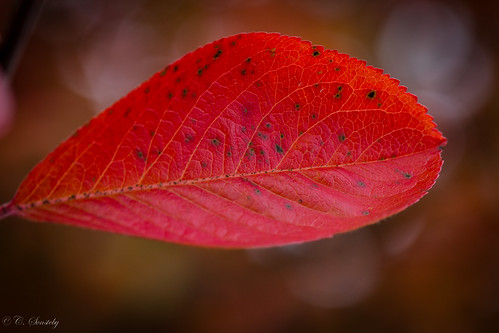 autumn red color colour macro leaves oslo closeup canon leaf colorful colours bokeh ngc september colourful ef100mm macro100mm canoneos60d ef100mmf28lmacroisusm
